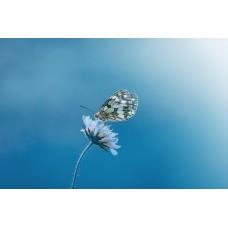 Kelebek Ruhsal Rehber